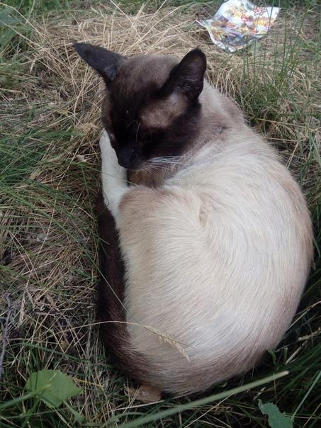 Кот Сильно Похудел На Даче. Кошка похудела и сильно линяет, а ест хорошо: в чем причина