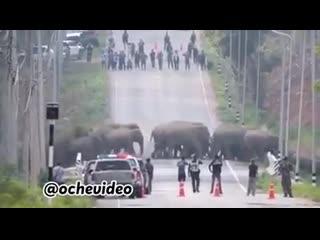 Освобождение слонов в Тайланде
