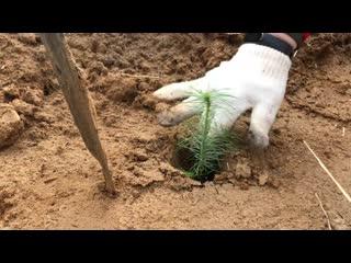 Сохраним лес Иркутская область