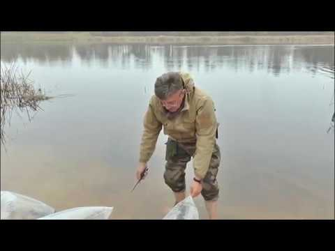 Зарыбление реки Синюхи