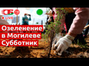 Массовая высадка деревьев в Могилеве | ПРЯМОЙ ЭФИР