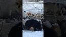 Стаи бездомных собак на посёлке Северном в городе Нижний Тагил