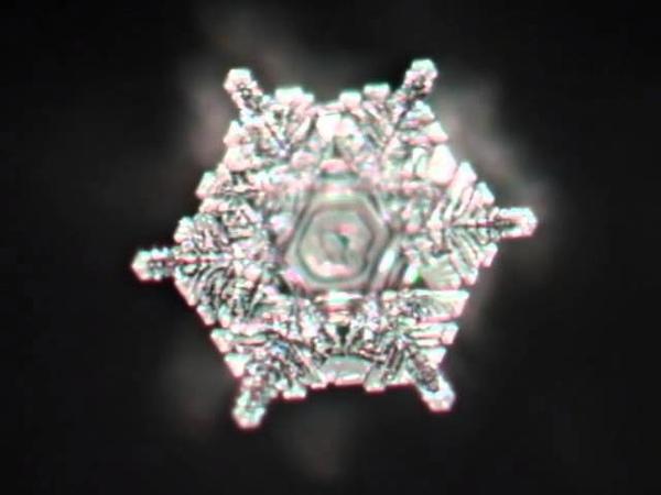 Masaru Emoto Water Crystal moving image of The Blue Danube
