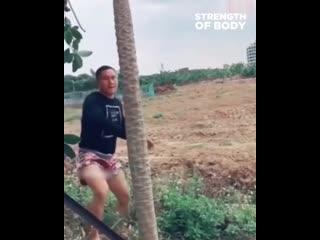 Китайский монстр ломает пальму