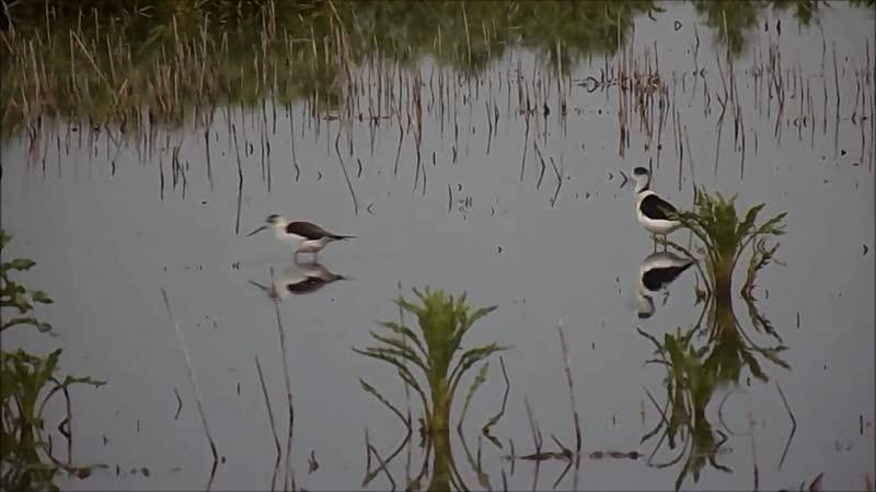 Птицы пойменного болота. 7-10.05.2020