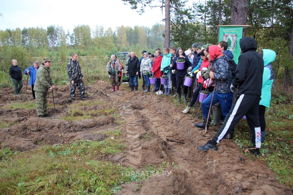 Всероссийский День посадки леса - 2019