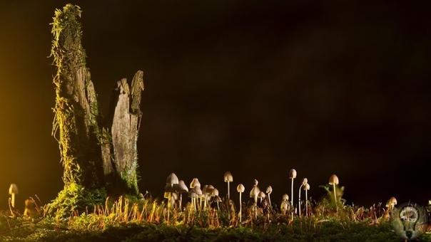 Первые грибы появились раньше, чем считалось ранее