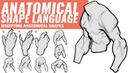 ANATOMICAL SHAPE LANGUAGE