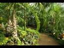 Виртуальная прогулка по Петропавловскому ботаническому саду