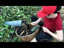 Unbelievable Experiment Oil Fishing Unique Snake Trapping System Catch A Lot Of Snake in Fish Hole