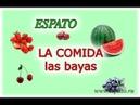 Испанский язык Урок 18 La comida - еда №3 - las bayas (espato)