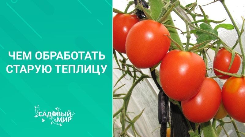 Чем обработать старую теплицу перед посадкой томатов перцев и баклажан