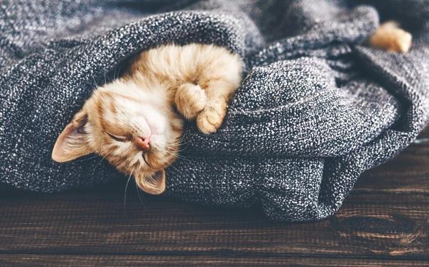 Пребывая по прежнему в дефиците физического тепла, в виду отсутствия отопления как дома так и на работекроме теплого свитера и носков, также сильно востребовано душевное тепло