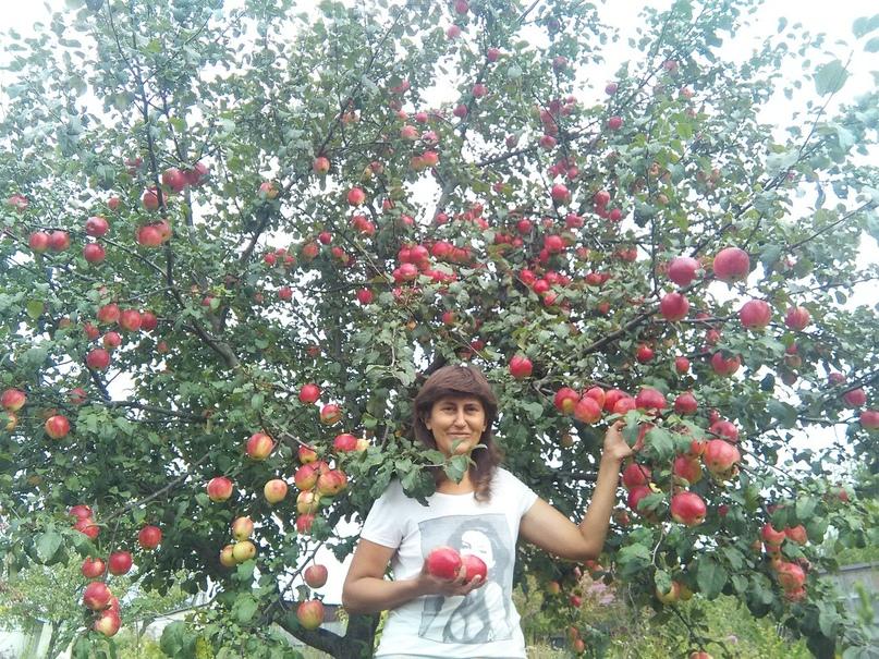 Кейс продажа саженцев и плодовых деревьев., изображение №4