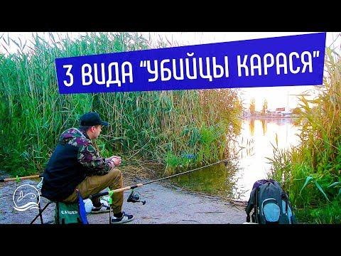 3 ВИДА УБИЙЦЫ КАРАСЯ. Что ЛУЧШЕ | Ловля на секретный ингредиент | Рыбалка в черте города