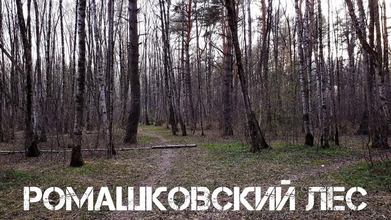 Весенний Ромашковский лес
