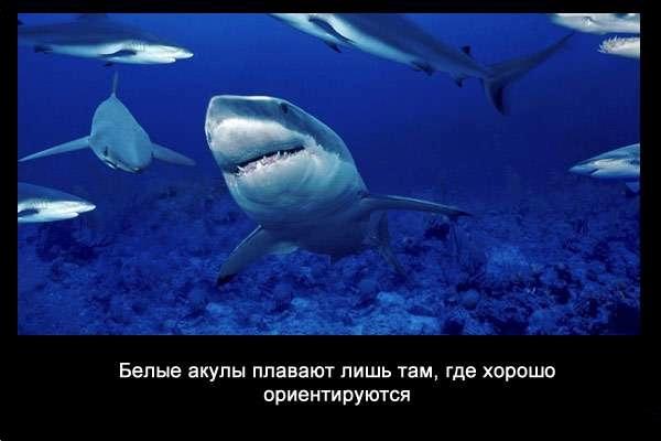 валтея - Интересные факты о акулах / Хищники морей.(Видео. Фото) _LbEuhLBNyE