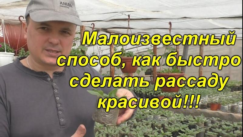 Мы делаем так с рассадой всегда! Открываем секреты красивой и здоровой рассады!(проверено)