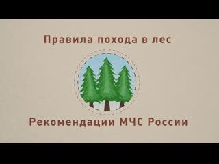 Правила похода в лес. Рекомендации МЧС России