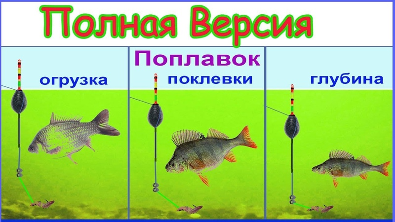 ОГРУЗКА поплавка, ПОКЛЁВКИ (ПЕРЕЗАЛИТОЕ ! прежнее видео с ДОПОЛНЕНИЯМИ по вопросам на ролик) fishing