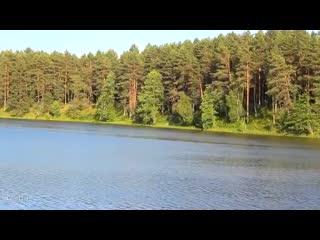 Птицы в лесу. Звуки природы / 6 минут