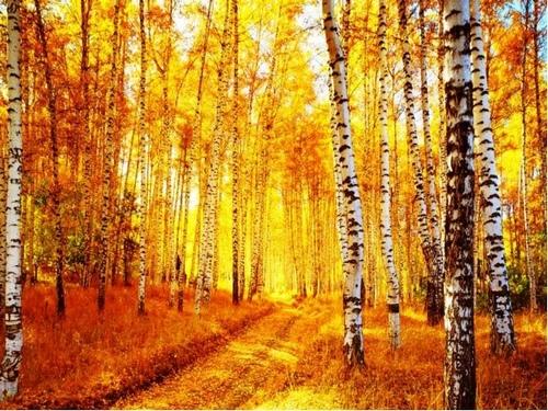 Берёзовая роща Едва заметно ветер ропщет, играя с заспанной листвой. Зовёт берёзовая роща под полог нежно золотой. Здесь всё загадочно красиво в сиянии солнечного дня. Досель неведомая сила