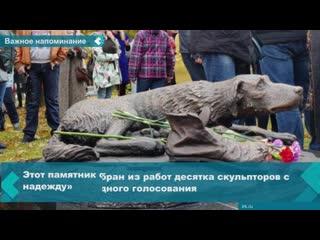 Сотни животных оказываются на улице по вине их хозяев