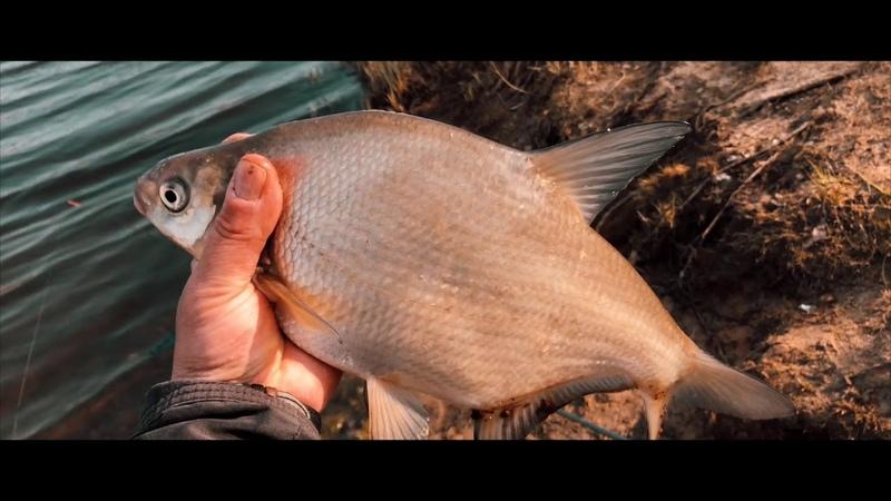 Пять кг леща на фидер Отличная рыбалка ранней весной 2019 год