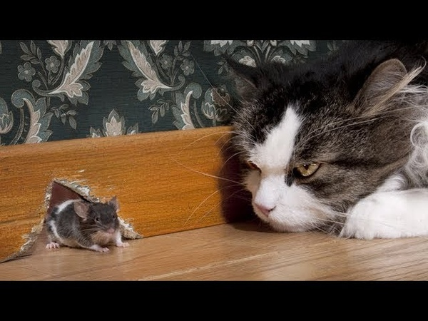 Funny Cat and Mouse Videos Tom and Jerry Real Life Best funny