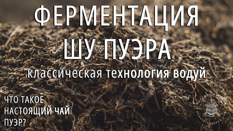 Что такое настоящий чай пуэр? Ч.4: Ферментация чая шу пуэр. Технология Во Дуй. Podarkivostoka.