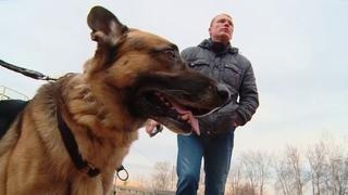 29 10 2019 Кинолог-волонтёр помог вернуться в Ижевск из Владивостока дальнобойщику с двумя собаками