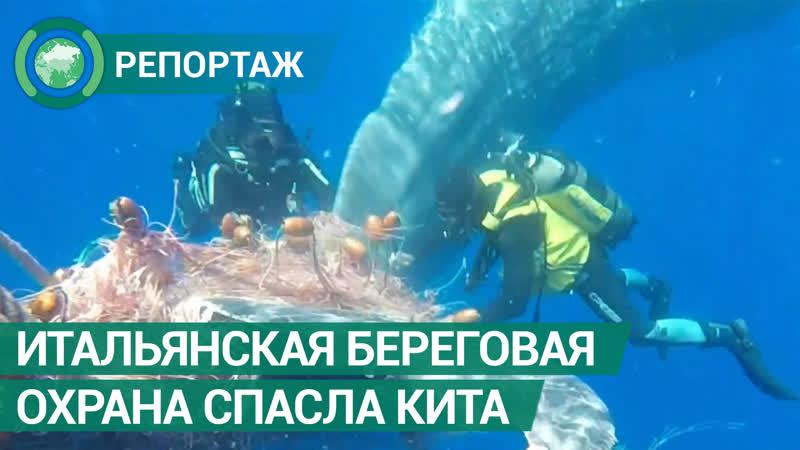 Итальянская береговая охрана спасла кита ФАН ТВ