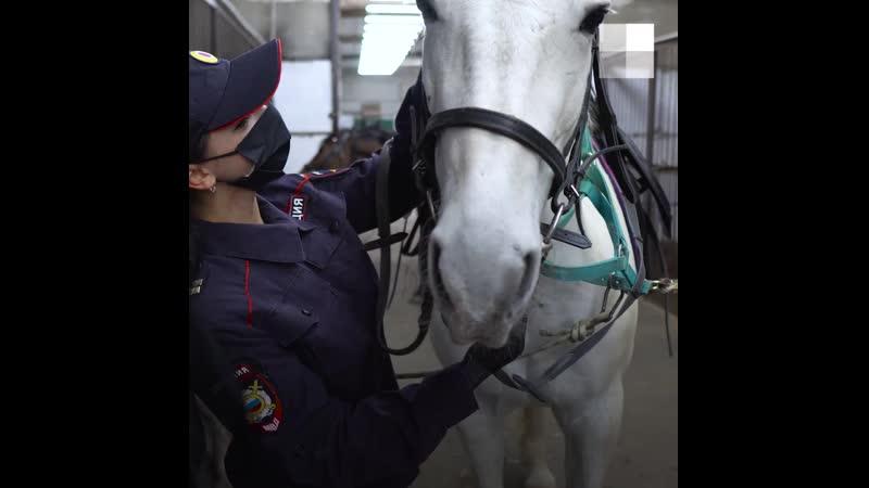 Будни полицейских коней