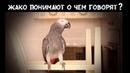 Попугаи жако доказали, что думают, когда говорят🐦💪