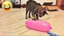 Смешные видео - КОШКИ 2021😂 Смешные коты приколы с котами до слез – Смешные кошки – Funny Cats
