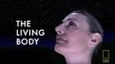 Внутри живого тела National Geographic Inside the Living Body 2007 г
