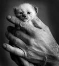 Фотоальбом человека Евгении Никитиной