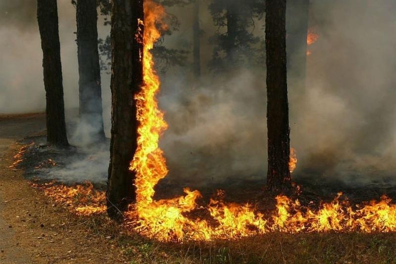 В лесах Марий Эл ожидается высокая пожароопасность