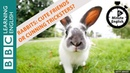 Rabbits cuddly friends or cunning tricksters Listen to 6 Minute English