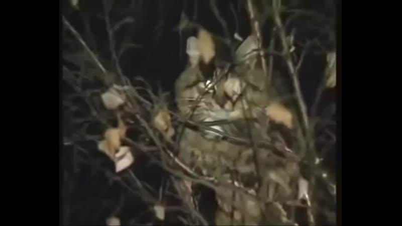 Бестолковый солдат снимает кота с дерева русские отучают котов по деревьям лаза