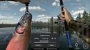 Fishing Planet Уникальная Чавыча и Кижуч Каник Крик Аляска