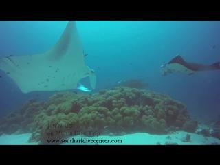 Manta Diving Trip by South Ari Dive / Mala Boutique Dhangethi