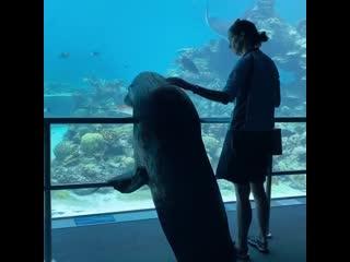 Морскому льву устроили персональную экскурсию по аквариуму NR