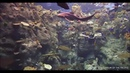 Буало Нарсежак «Пейзаж с Булли»