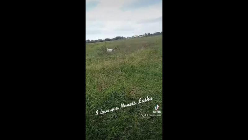 Видео от Светланы Саргос
