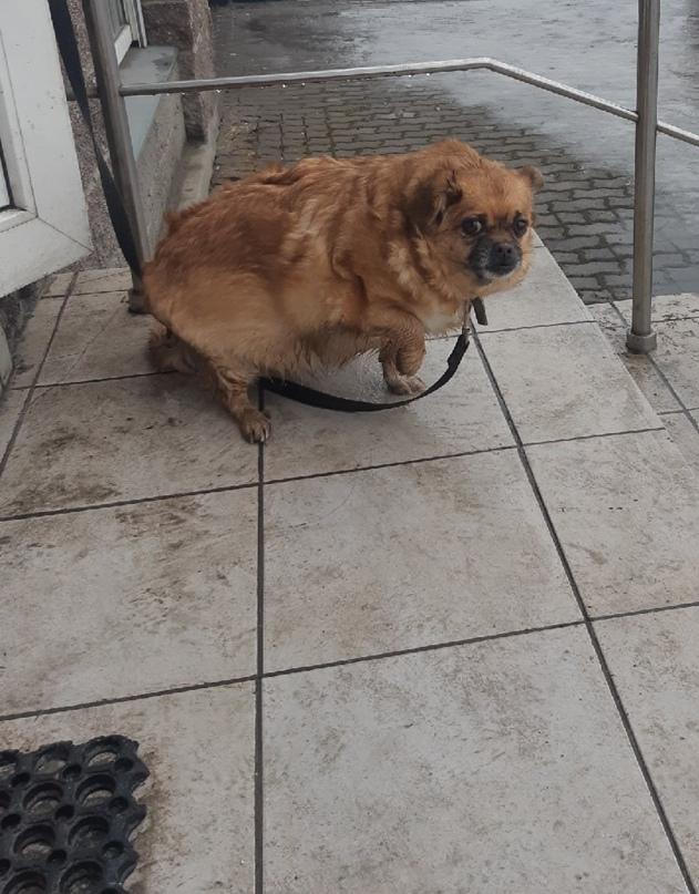 🔥Фото собачки, привязанной к перилам около магазина, разлетелось по соцсетям. Лю...