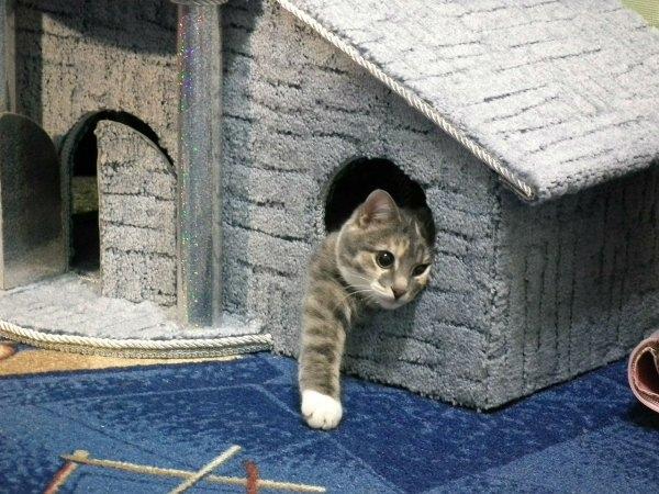 Если у вас скоро появится кошка, изображение №7