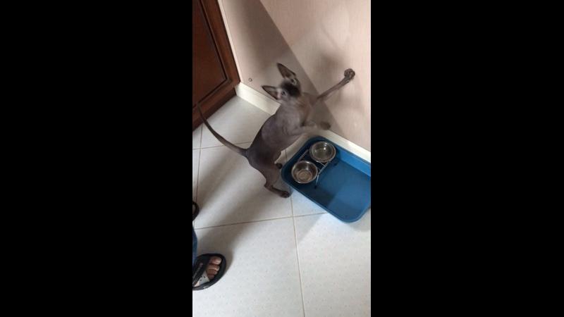 Видео от Елены Воронцовой