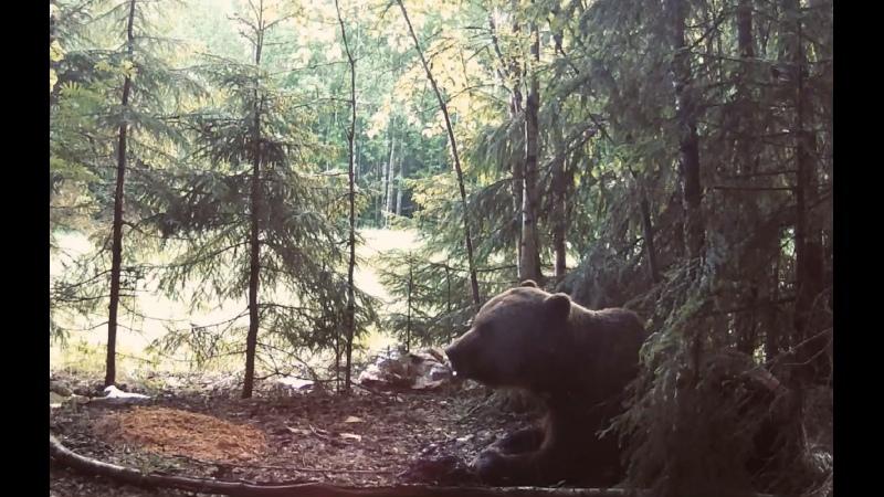 Видео от Министерство лесного хозяйства НО