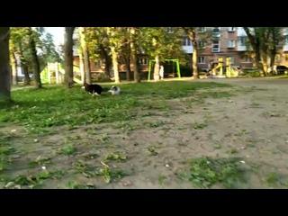 Video by Приют для собак «Доброе сердце», Пермь
